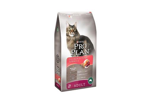 猫粮选择要适合猫咪的口味-幼猫饲养